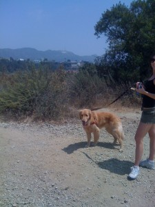 Finnegan back in Hollywood (the sign can be seen in the distance).