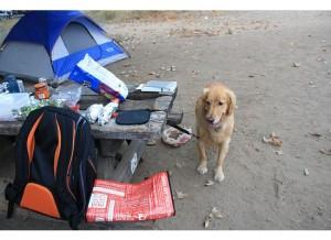 Such a good little camper!